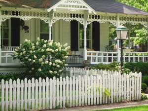 An antique home with a white picket fence and a white flower bush in front
