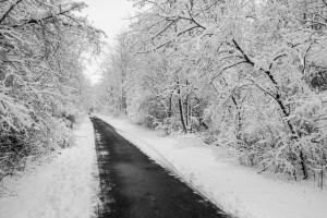 A paved pathway along the trees covered in snow