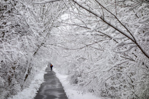 A paved pathway in the winter with snow and ice all on the trees